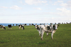 BCCM hails Senate probe's call to cut regulation for co-ops in dairy