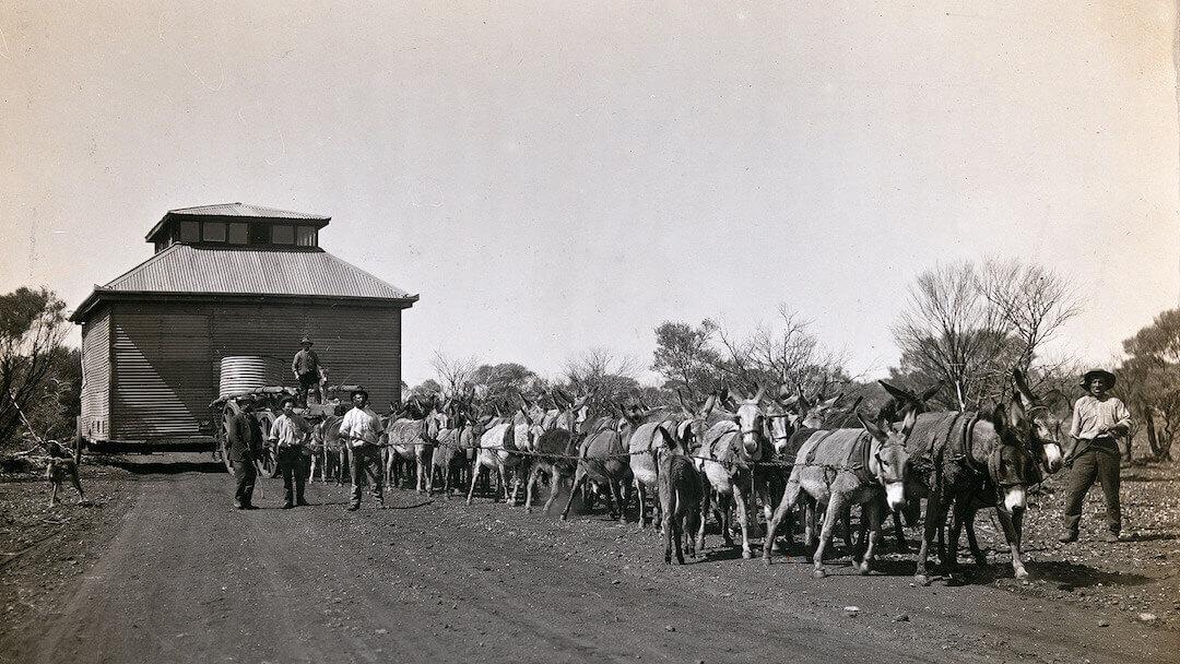 Donkey team moving Gwalia Co-op Store 1910