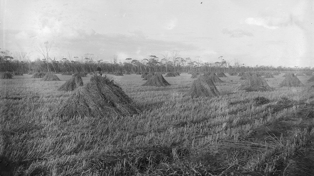Property of WA Johnson near Bruce Rock 1915