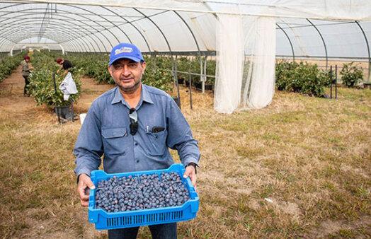 Oz Group's Stephen Thandi blueberry farming credit Paul Harris