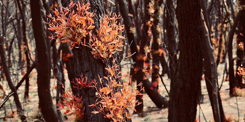 Beyond Bushfires: Co-operative bushfire recovery