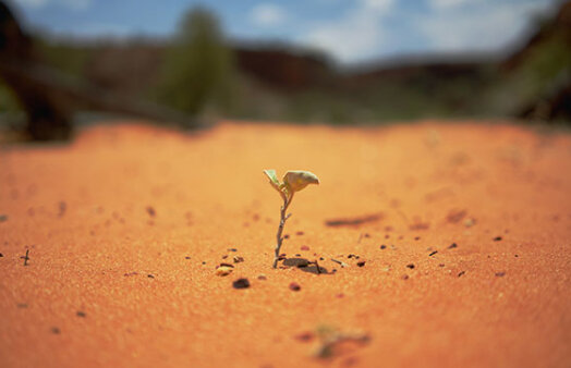 resilience - seedling growing in desert