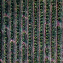 A drone shot of Macadamia Farm land in QLD, Australia